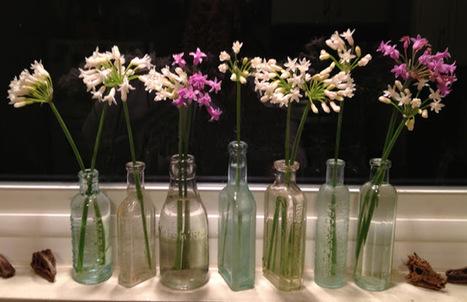 Aprille's SoCal Gardening ✿❀✾: Sweet Garlic   Annie Haven   Haven Brand   Scoop.it