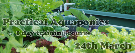 Practical Aquaponics Course | Wellington Aquaponics | Scoop.it