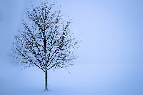 10 Ideas for Winter Landscape Photos – Loaded Landscapes | Photography | Scoop.it