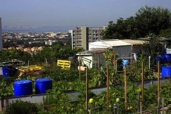 Le boom de l'agriculture urbaine | agriculture, alimentation et autres fables | Scoop.it