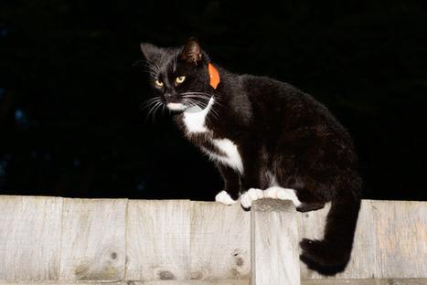 A Cat's Built-In GPS | beauty-lover | Scoop.it