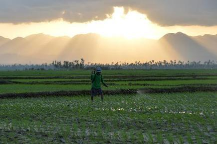 'Safer' pesticide could create toxic mercury, study says | Environnement et DD | Scoop.it