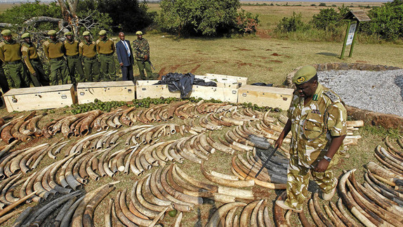 The Tragic Slaughter of Tens of Thousands of Elephants -- Just For Their Tusks