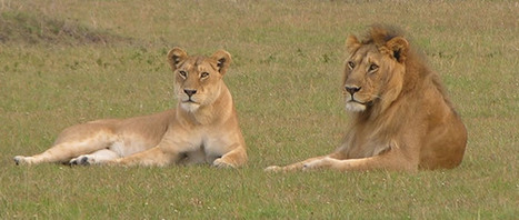 Tanzania Southern Circuit | Tanzania Safari Holidays | Scoop.it