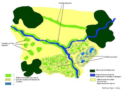 Feu vert pour la Trame verte et bleue | Irstea | l'écologie en milieu urbain | Scoop.it