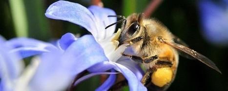 Biodiversité : vive les insectes au jardin ! | Nature en vie | Scoop.it