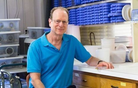 Global Leader in Insect Management Earns Koffler Prize | UANews | CALS in the News | Scoop.it