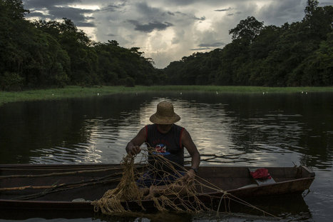 Fishermen in Brazil Save a River Goliath, and Their Livelihoods - New York Times | Rainforest EXPLORER:  News & Notes | Scoop.it
