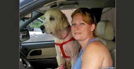 """New home for dog found in dead owner's arms after Texas tornado 