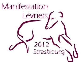 La tragedia de los galgos españoles llega a Estrasburgo | Nature Animals humankind | Scoop.it