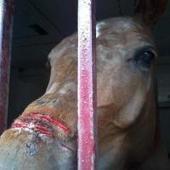 Parlamentarios Animalistas reclaman que se incluya el bienestar animal en la Constitución española   Legislación   Scoop.it
