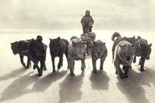 Polar Pioneers - Wall Street Journal | Australia's Antarctic Expedition - Douglas Mawson | Scoop.it