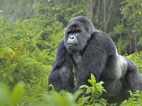 WWF - Endangered Species Conservation | World Wildlife Fund | PV Earth's Water Report | Scoop.it