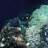 Marine Mineral Resources
