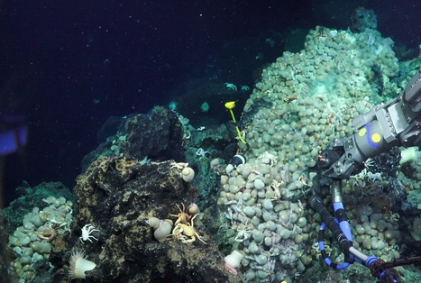 Searching For Life Week One - The Story So Far - Schmidt Ocean Institute | Marine Mineral Resources | Scoop.it