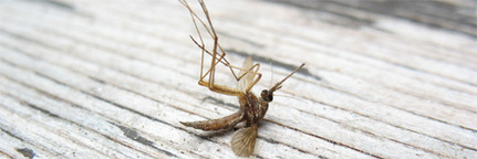 Les anti-moustiques au DEET aussi dangereux que des pesticides ? | Toxique, soyons vigilant ! | Scoop.it