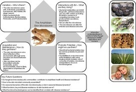 Harnessing the Microbiome to Prevent Fungal Infections: Lessons from Amphibians | Plant Immunity And Microbial Effectors | Scoop.it