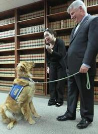 Suffolk DA hires dog to comfort people in distress - Boston Globe | A Community of Dog | Scoop.it