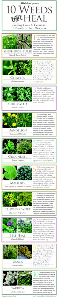 Common Weeds | Gardening eye doctor | Scoop.it
