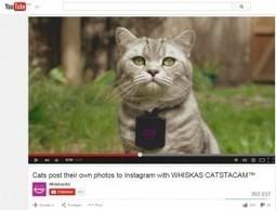 Whiskas permet aux chats de poster leurs photos sur Instagram en Australie | Stratégie de contenu | Scoop.it