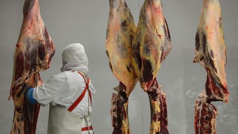 Ce que l'on sait du trafic de viande de cheval dans le sud de la France | Cheval et Nature | Scoop.it