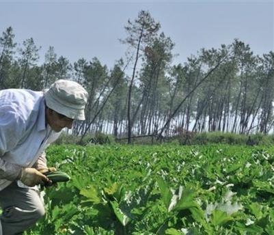 L'agriculture bio couvre plus de 37 millions d'hectares dans le monde | Le monde bio | Scoop.it