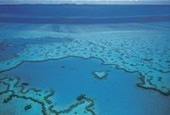 Coral Reefs 101 | All about water, the oceans, environmental issues | Scoop.it