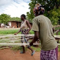 African farmers triumph over pests   Questions de développement ...   Scoop.it