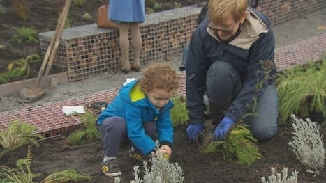 Mass planting at Vancouver park aims to create bee oasis | Discovery Project | Scoop.it