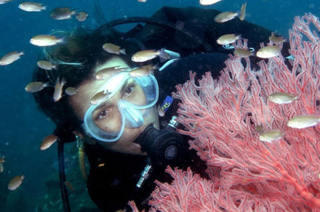 my diving experience | Surfing The Web | Scoop.it