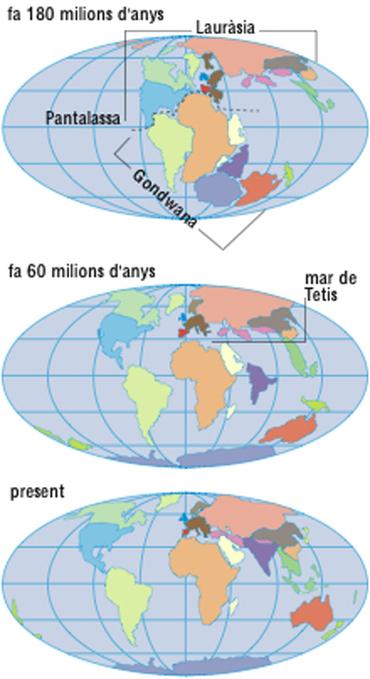 deriva dels continents | Gran Enciclopèdia Catalana | Enciclopèdia.cat | Ciències del món contemporani | Scoop.it