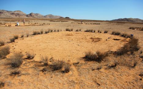 Les cercles de fées namibiens : des réserves d'eau pour termites | EntomoNews | Scoop.it