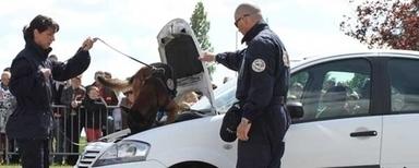 Maître-chien   Fonction publique, droit, justice, défense, sécurité   Scoop.it