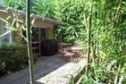 The Plants You Shouldn't Plant in Your Yard: Bamboo | Invasive Species | Scoop.it