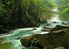 ecosistemas terrestres | ecosistemas | Scoop.it