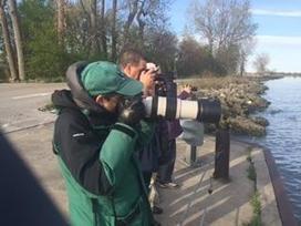 Thousands of birders flock to northwest Ohio for Warbler migration   Birding in the news   Scoop.it