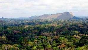 Gabon : Minkébé, dernière frontière sauvage | Confidences Canopéennes | Scoop.it