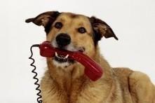 Tierliebe: Frauen im Urlaub vermissen Hund mehr als den Mann - DIE WELT | Urlaub mit Hund | Scoop.it
