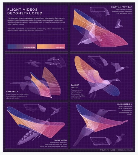 Flight Videos Deconstructed: The Patterns Wings Trace in Flight | visual data | Scoop.it