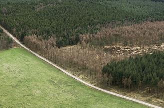 La forêt fragmentée perd en biodiversité | Ecology view | Scoop.it