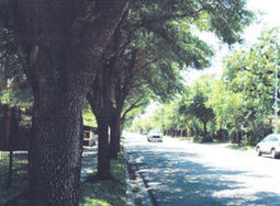 Yale St.'s Middle-Aged Trees Just Got More Expensive To Chop Down | Swamplot | Citizens' Environmental Coalition (Houston) | Scoop.it