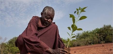 Burkina Faso : Yacouba Sawadogo, l'homme qui a arrêté le désert | Les déserts dans le monde | Scoop.it