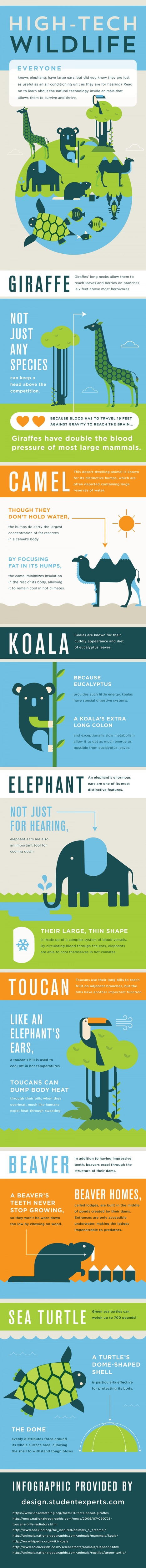 High-Tech Wildlife (Infographic) | Learning & Mind & Brain | Scoop.it