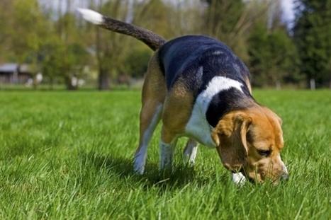 France Bleu   24 heures de trou pour un chien de chasse en Creuse   Beagle   Scoop.it