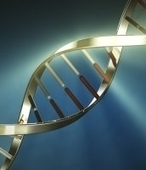 BBSRC MENTION Study finds how bacteria detect and ingest new DNA | BIOSCIENCE NEWS | Scoop.it