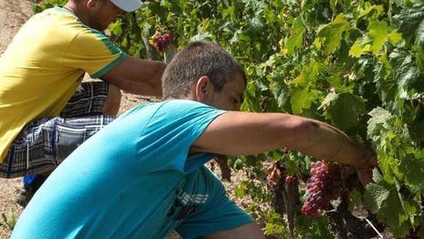 Le vin bio crée 50% d'emplois en plus que le vignoble classique   La résilience territoriale pour un avenir durable   Scoop.it
