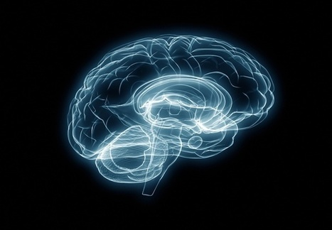How Poverty Taxes the Brain | operationalizing complexity | Scoop.it