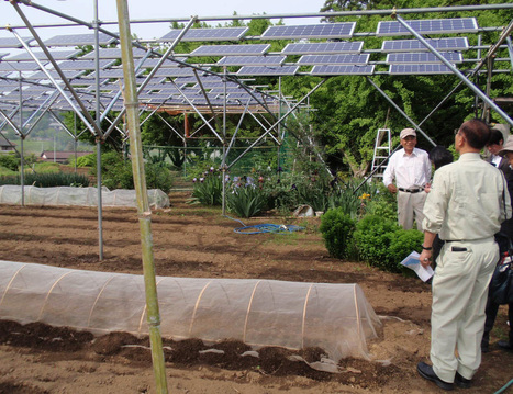 Solar Farmers in Japan to Harvest Electricity With Crops | Digital Sustainability | Scoop.it