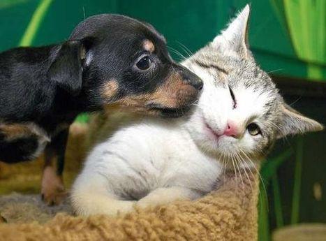 Cum reactioneaza doi catelusi cand vad pentru prima data o pisica!? VIDEO   Cap Limpede   Scoop.it