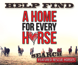 Horses for Sale | Horse Classifieds, Pictures, Horse Trailers - Equine.com | Horses and Riding | Scoop.it